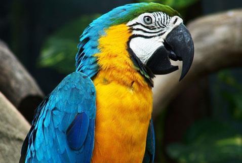 Papağan-resimleri_1