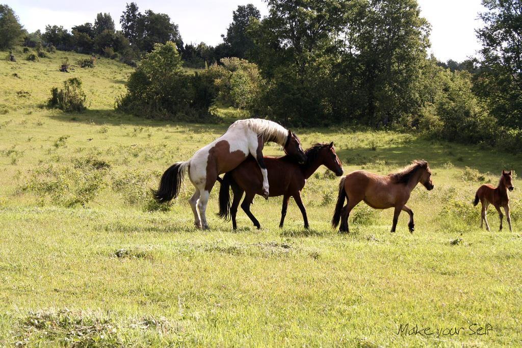 atlarda-çiftleşme_3