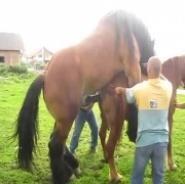 atlarda-çiftleşme_5