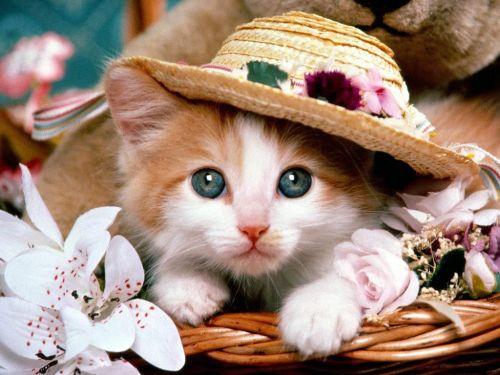 Süslü kedi resmi