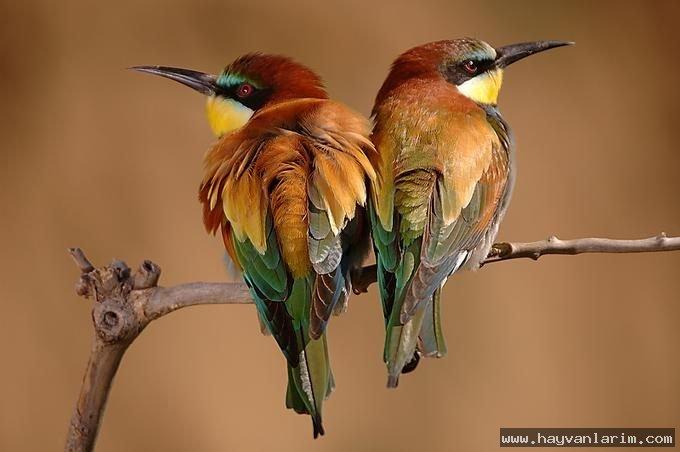 Dalda Kuş resmi