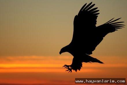 Gün batımı ve  Kartal resmi muhteşem bir görüntü