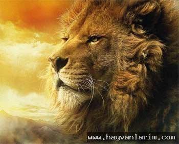 Güneşin batışı ve Aslan resmi