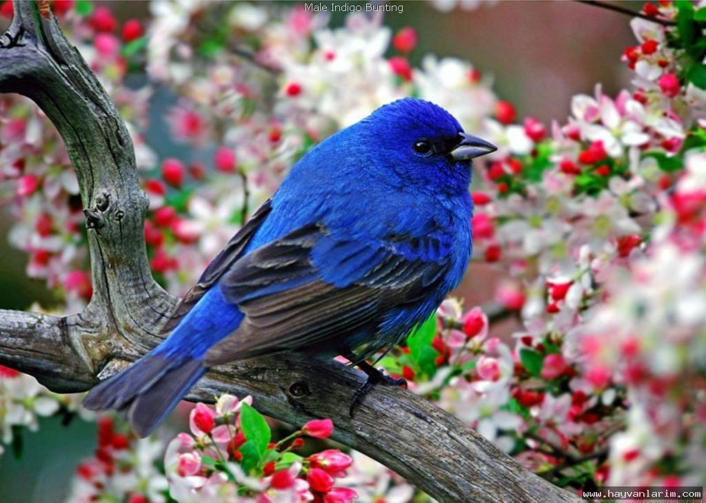 Mavi renkli kuş resmi