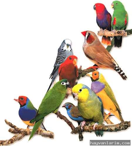 renkli-papagan-resmi