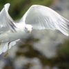 Beyaz kuş resmi