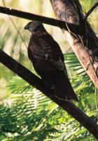 Çakır kuşu