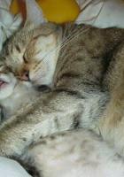 Anne sevgisi Kediler