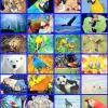 Omurgalı ve Omurgasız Hayvanlar hakkında bilgiler