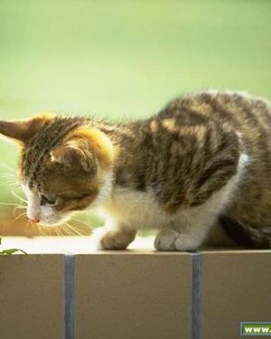 Kedi Görüntüsü