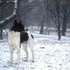 Canaan Köpeği