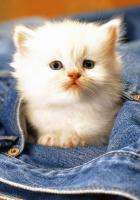 sevimli kedi resimleri