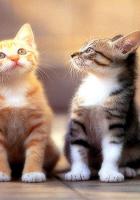 Kedilerin resmi