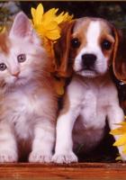Şirin kedi ve köpek resmi