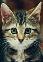 Tatlı kedicik