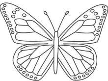 Kelebek Boyama Resimleri Hayvan Boyama Resimleri Hayvanlar