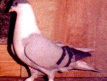 Dıyarbakır Kuşları