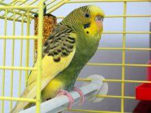 Muhabbet kuşları_2.jpg
