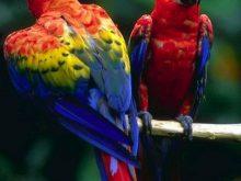Renkli tatlı papağanlar