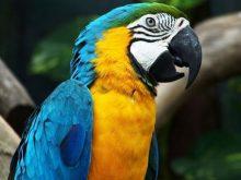 Papağan resimleri_1.jpeg