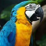 Papağan-resimleri_2.jpg