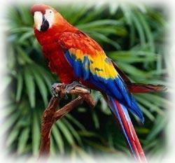 Papağan-resimleri_2