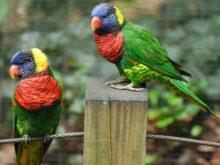 Papağan resimleri_3.jpg
