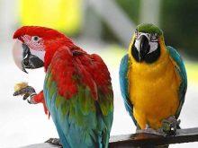 Papağan resimleri_4.jpg