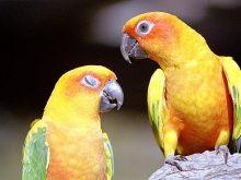 Papağan resimleri_5.jpg