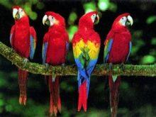 Papağan resimleri_6.jpg