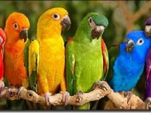 Papağan resimleri_7.jpg