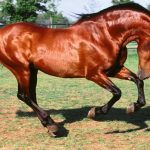 ingiliz atları