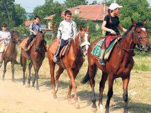 Yarış atları