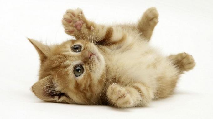 Yavru Kedi Resimleri