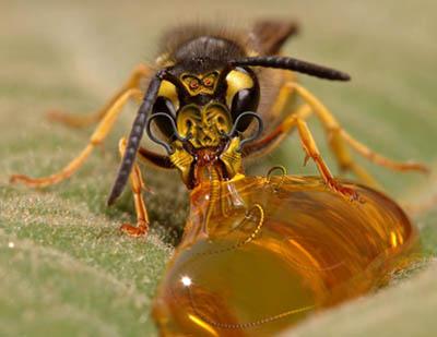 Arı Desteklemesi 2011
