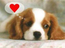 Aşık köpek resmi