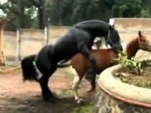 atlarda çiftleşme_1.jpg