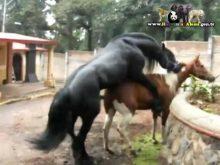 atlarda çiftleşme_2.jpg