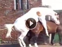 atlarda çiftleşme_4.jpg
