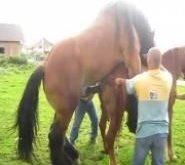 atlarda çiftleşme_5.jpg