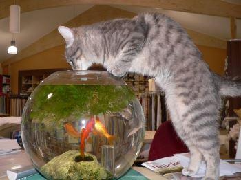 Balık hırsızı kedi