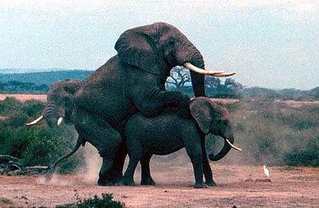 Hayvanların Çiftleşmesi Hakkında Bilgi ve Videolar