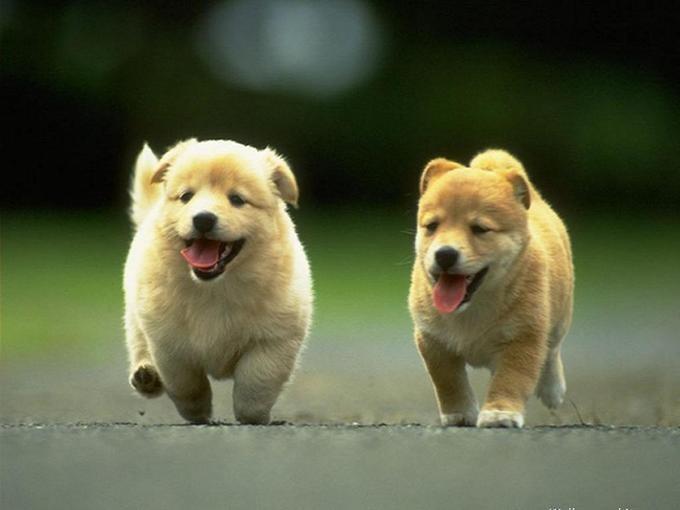 güzel-köpek-resimleri_1