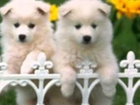 güzel köpek resimleri