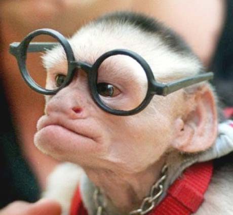 Gözlüklü maymun resmi