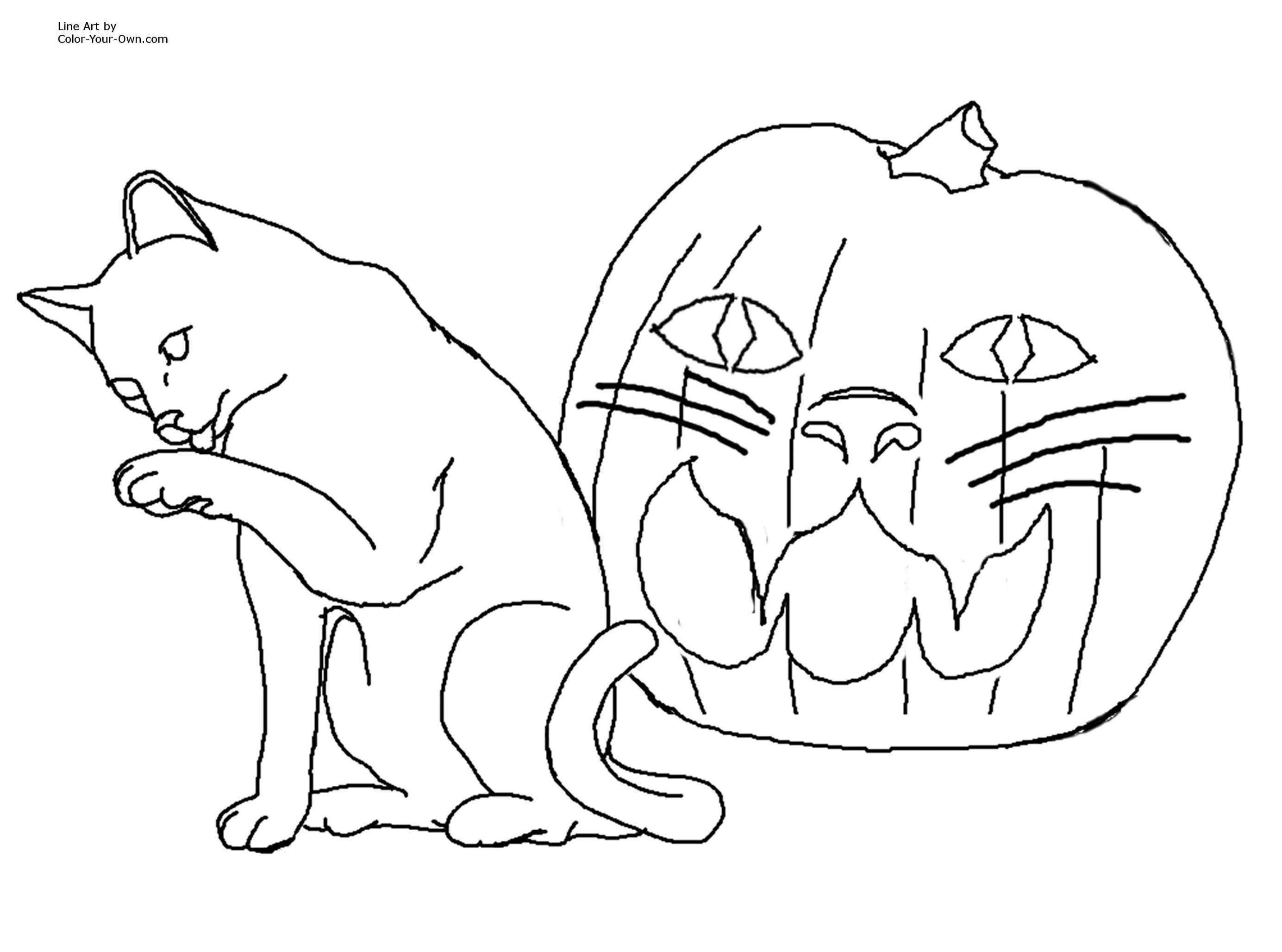 kedi-boyama-2_6