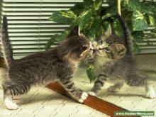 Kedilerr,Kedi Resimleri