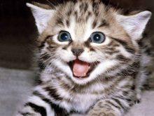 kedi_resimleri_ok_sevimli