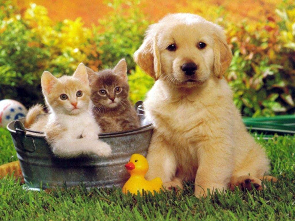 Kediler köpekler