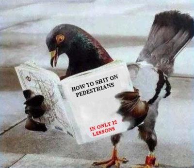 Kitap okuyan güvercin resmi